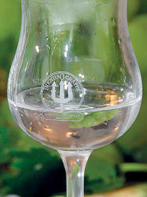 Trentino Grappa, A Heart-Warming Spirit