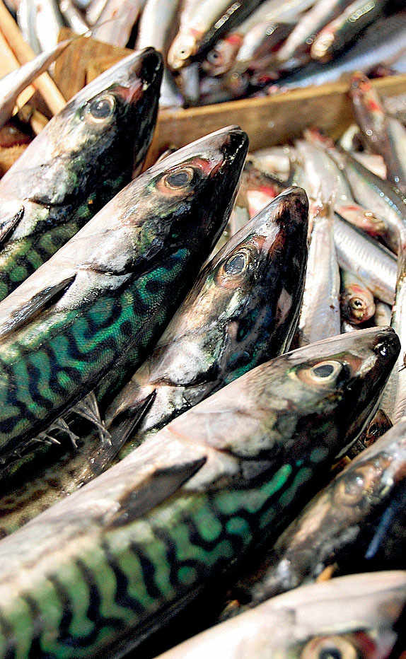 Oily fish. Mackerel.