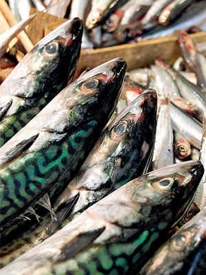 Oily Fish, the Bounty of Sicily